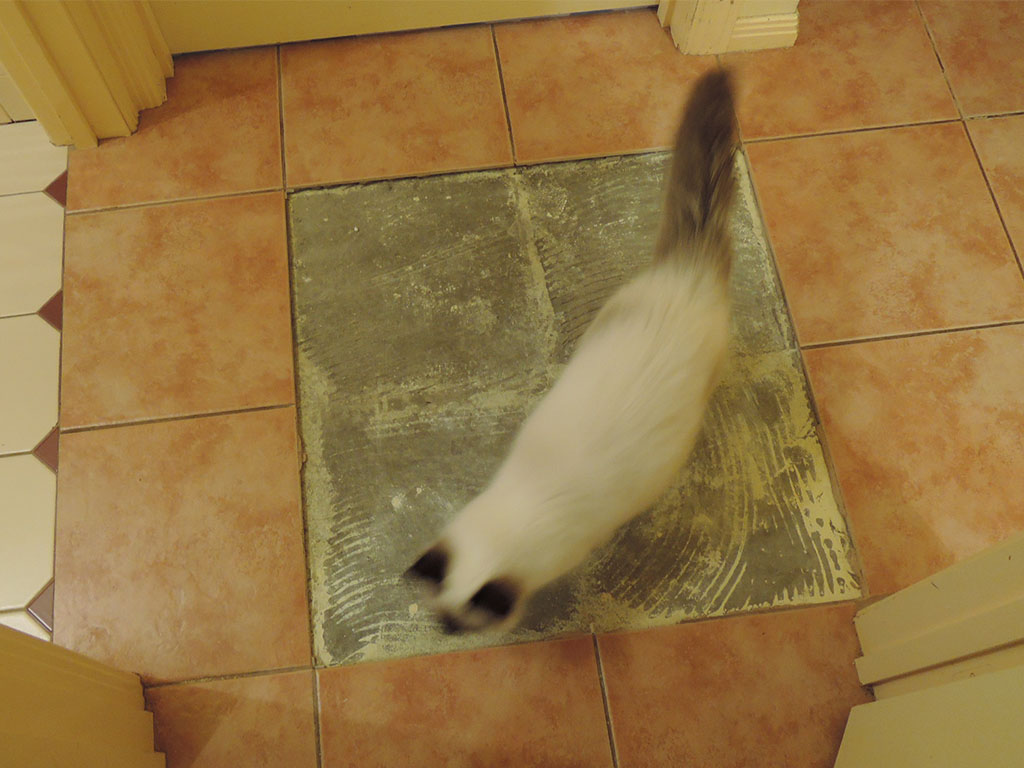 cat on tile